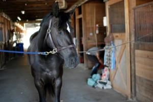 ecolicious equestrian, barn, eco barn, eco horse keeping